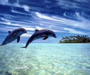 dolphin, sea, and beach image