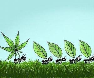 ant, weed, and funny image