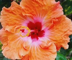 tropical and hibiskus image