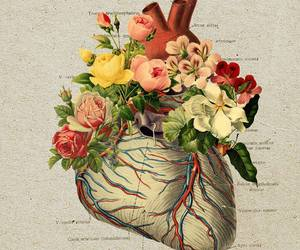 heart, flowers, and anatomy image