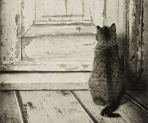 cat, door, and black and white image