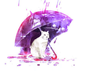 cat, cute, and purple image