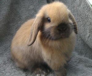 baby animals, cute animals, and rabbit image