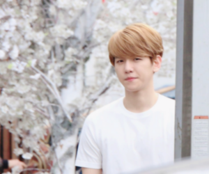 exo, header, and twitter image