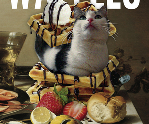 bacon, cat, and eat image