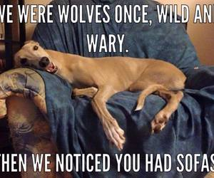 dog, sofa, and funny image