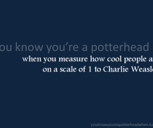 funny, harry potter, and potter head image