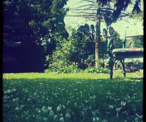 cherry blossom, chill, and green image