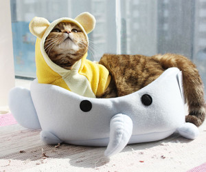 cat, bed, and kitten image