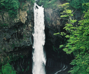 forest, nature, and waterfalls image