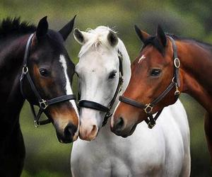 horse, animal, and brown image