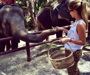 girl, elephant, and pretty image