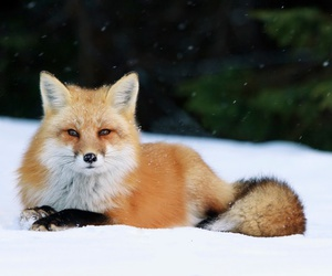 animals, snow, and colors image