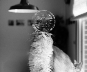 black and white, bubble, and cat image