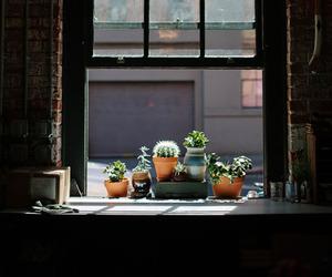 window, cactus, and plants image