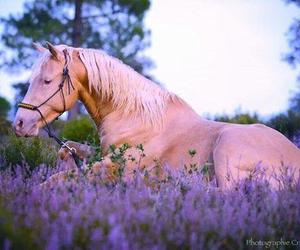 amazing, animal, and horse image