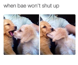 puppy, love, and bae image