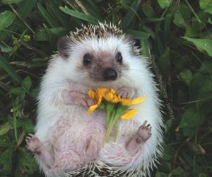 hedgehog, flowers, and cute image