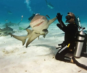 shark, funny, and animal image