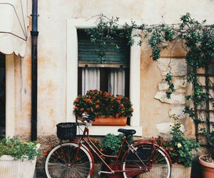 bike, flowers, and travel image
