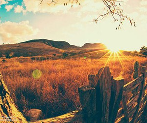 sun, nature, and photography image