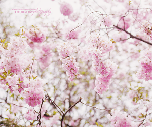 canon, pink, and flowers image