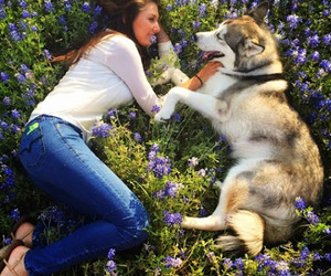 dog, animal, and best friends image