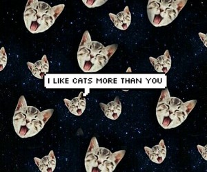 blue, cats, and stars image