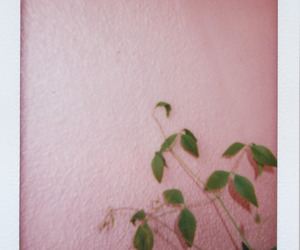 grunge, nature, and indie image
