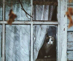 cat, window, and house image