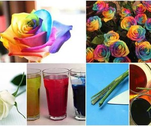 diy, flowers, and colors image