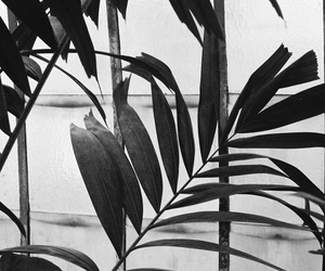 leaves and plants image