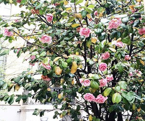 blooms, flowers, and france image
