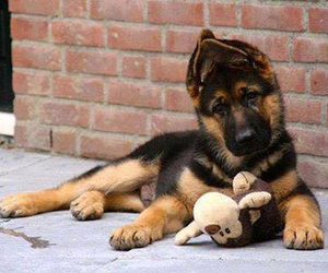 dog, puppy, and baby animals image