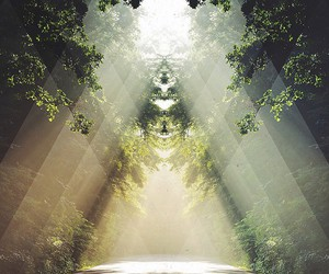 nature, art, and forest image