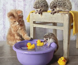 cat and hedgehogs image