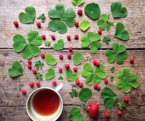 tea and clover image
