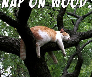 cat, funny cat, and napping image