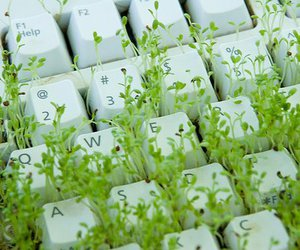 keyboard, green, and grass image