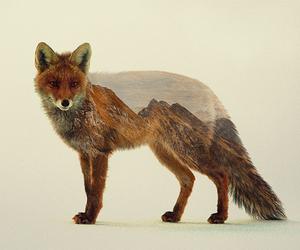 art, fox, and nature image