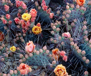 beauty, love, and cactus image