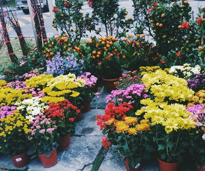 colourful, photophotography, and flowers image