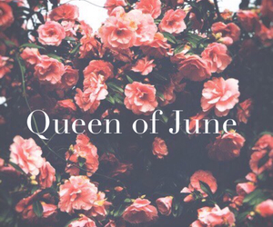 june, pink, and flowers image