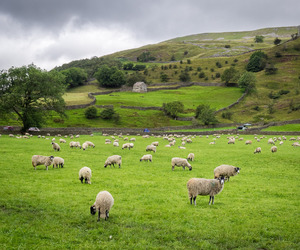 Great Britain, north yorkshire, and travel image