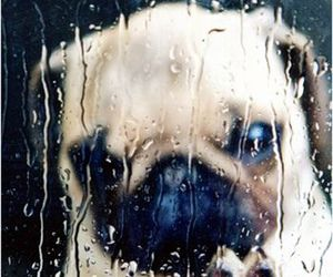 dog, rain, and cute image