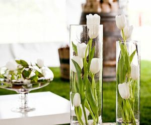 tulips, flowers, and white image