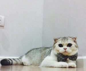 cat, kitty, and котенок image