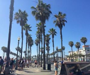 beach, fun, and palm trees image
