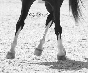 beautiful, dressage, and elegance image