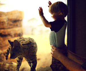 animal, baby, and summer image